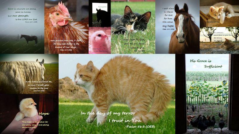 Animal variety