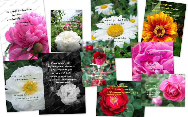 Flower Garden variety
